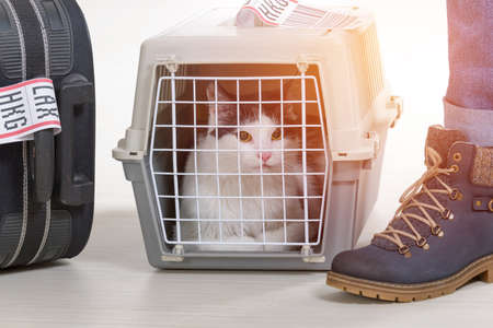 Photo pour Cat in the airline cargo pet carrier waiting at the airport after a long journey - image libre de droit