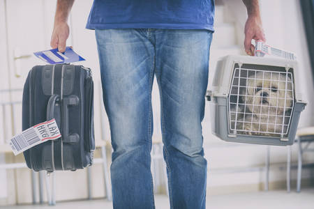 Photo for little dog in the airline cargo pet carrier at the airport after a long journey - Royalty Free Image