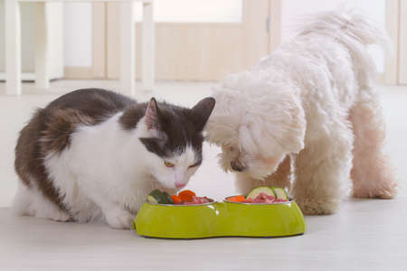 Little dog maltese and black and white cat eating natural, organic food from a bowl at home