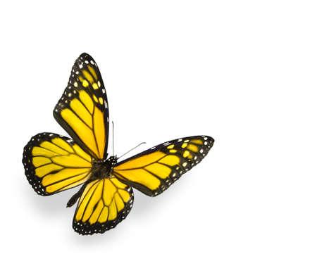 Foto de Bright Yellow Butterfly Isolated on White - Imagen libre de derechos
