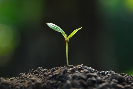 Photo pour young plant new life - image libre de droit