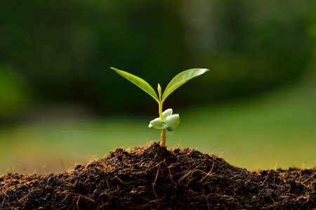 Photo pour Young plant in the morning light - image libre de droit