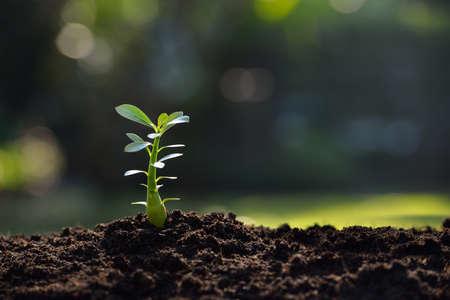Foto de Young plant in the morning light - Imagen libre de derechos