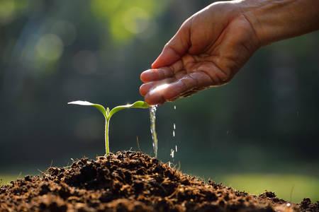 Foto für Farmer hand watering a young plant - Lizenzfreies Bild