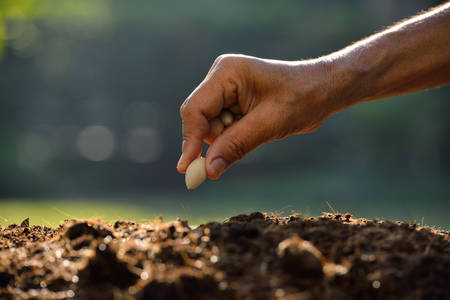 Photo pour Farmer hand planting a seed in soil - image libre de droit