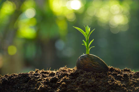Photo pour Green sprout growing from seed on nature background - image libre de droit