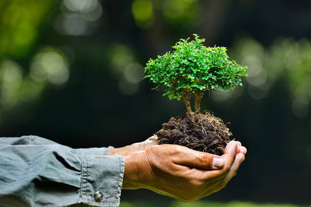 Foto per Farmer's hands holding a small tree on nature background - Immagine Royalty Free