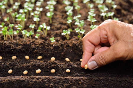 Foto de Farmer's hand planting seeds in soil - Imagen libre de derechos