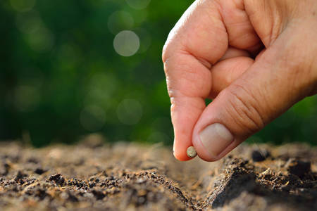 Photo for Farmer's hand planting a seed in soil - Royalty Free Image