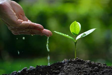 Photo pour Farmer's hand watering a young plant - image libre de droit