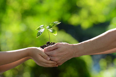 Photo pour Two hands holding together a green young plant - image libre de droit