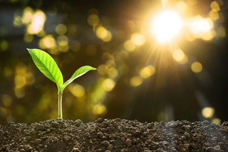 Photo pour Young plant in the morning light on nature background - image libre de droit