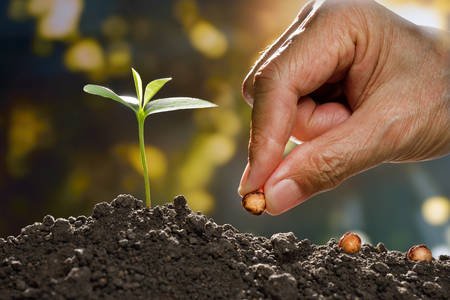 Foto de Farmer's hand planting a seed in soil - Imagen libre de derechos