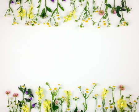 Photo pour Colorful bright frame made of meadow flowers on white background. Flay lay, top view with copy space - image libre de droit