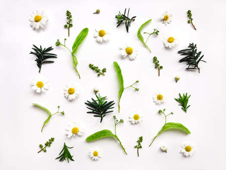 Foto de Colorful bright pattern of meadow herbs and flowers on white background. Flat lay, top view, natural background - Imagen libre de derechos