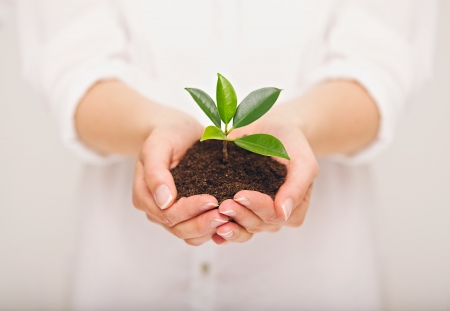 Photo pour Woman's hand holding young plant, ecology concept - image libre de droit