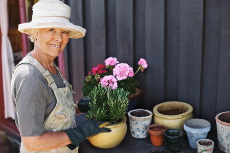 Foto per Active senior woman potting some plants in terracotta pots on a counter in backyard. Senior female gardener planting flowers in pots - Immagine Royalty Free