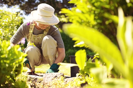 Photo for Senior woman with gardening tool working in her backyard garden - Royalty Free Image