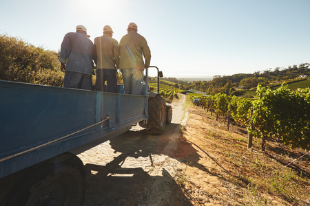 Photo for People riding in a tractor wagon through grape farms. Vineyard worker on a wagon ride at farm. - Royalty Free Image