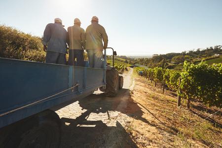 Foto de People riding in a tractor wagon through grape farms. Vineyard worker on a wagon ride at farm. - Imagen libre de derechos