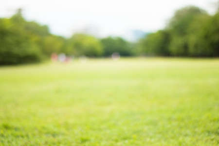 Photo for Blurred park, natural background - Royalty Free Image