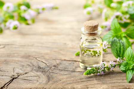 Photo for Peppermint essential oil and peppermint flowers on the wooden table - Royalty Free Image