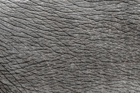 this is  texture of real elephant skin