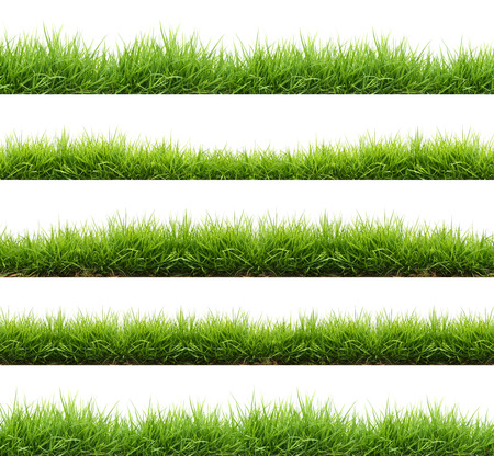 Foto de fresh spring green grass isolated on white background - Imagen libre de derechos