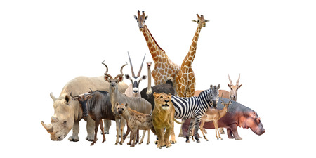 Photo pour group of africa animals isolated on white background - image libre de droit