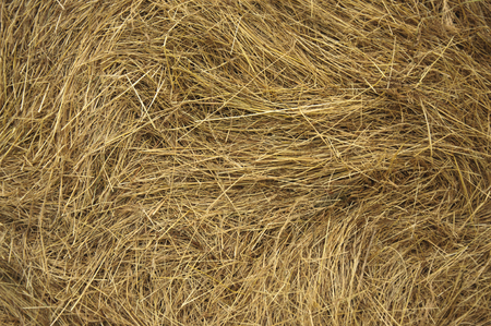 Photo for hay texture closeup - Royalty Free Image