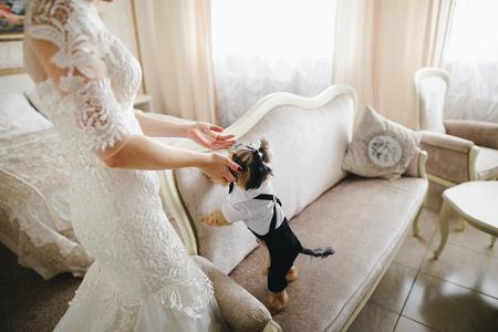 Photo pour Dog in the room of the bride - image libre de droit