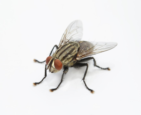 Foto per fly - Immagine Royalty Free