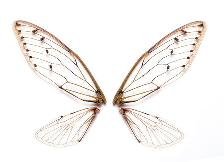 Foto de Insect cicada - Imagen libre de derechos