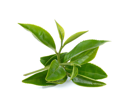 Photo pour Green tea leafs isolated on white background - image libre de droit