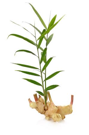 Photo for Fresh ginger isolated on white background - Royalty Free Image