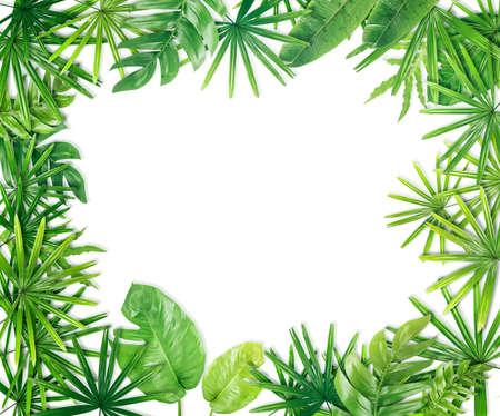 Foto de Green leaf border background - Imagen libre de derechos