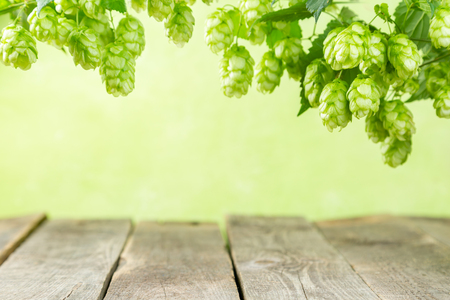 Photo for Empty background with wood table and hops branches, copy space - Royalty Free Image