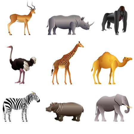 Illustration for Popular African animals high detailed vector collection - Royalty Free Image