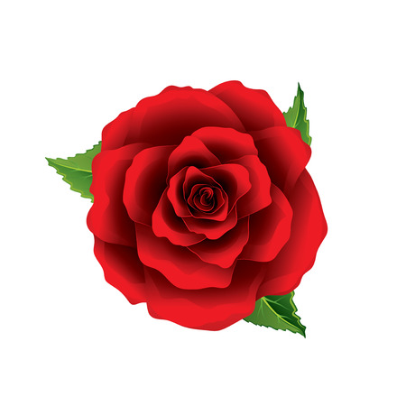 Ilustración de Red rose flower top view isolated on white photo-realistic vector illustration - Imagen libre de derechos