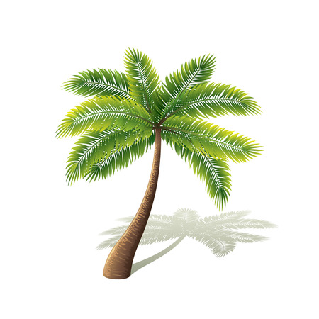 Ilustración de Palm tree isolated on white photo-realistic vector illustration - Imagen libre de derechos