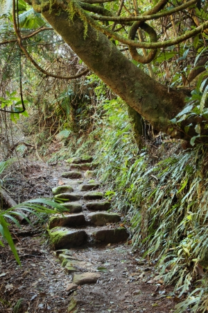 area lamington national park gondwana land with a up the garden path overgrown background image
