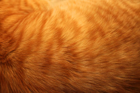 Photo for Image of ginger cat's fur background - Royalty Free Image