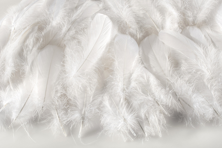 Photo pour Layer of soft fluffy white bird feathers over a matching white background for a delicate monochromatic texture - image libre de droit