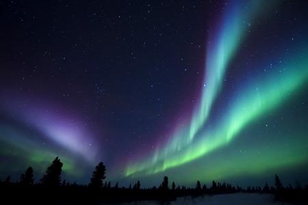 Photo pour Nightsky lit up with aurora borealis, northern lights, wapusk national park, Manitoba, Canada. - image libre de droit