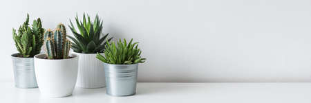 Photo for Collection of various cactus and succulent plants in different pots. Potted cactus house plants on white shelf against white wall. - Royalty Free Image