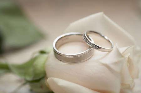 Closeup of silver wedding rings on white rose DOF focus on diamonds