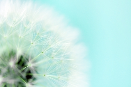 Photo for Dreamy dandelion macro - Royalty Free Image