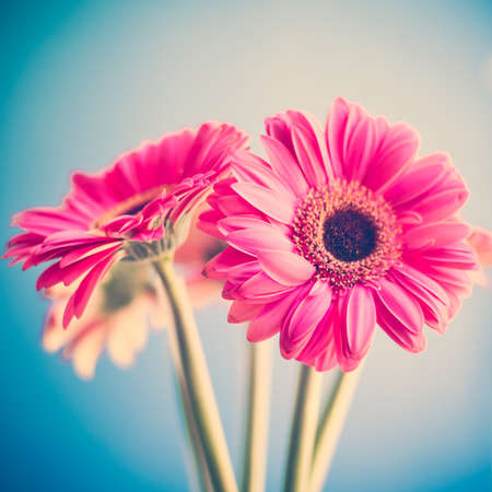 Photo for Vintage pink flowers - Royalty Free Image