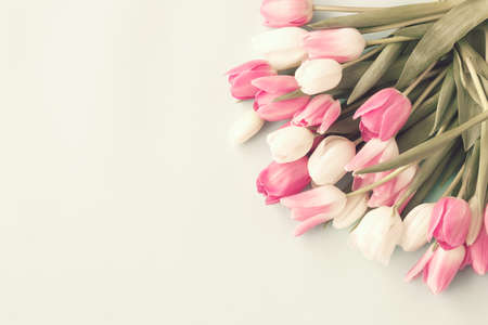 Photo for Vintage pink and white tulips - Royalty Free Image