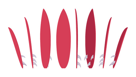 Surfboard set, sport of surfing equipment